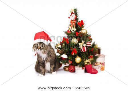 Cat In Red Christmas Cap Sit By Christmas Tree