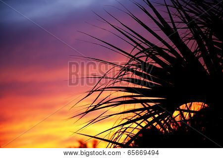 Palm trees silhouetted against the sunset