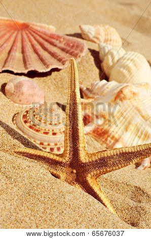closeup of a starfish and some seashells on the sand of a beach