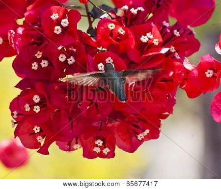 Humming Bird Pink Flowers