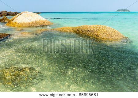 Tropical fishes at Kata Noi famous beach at Phuket Thailand