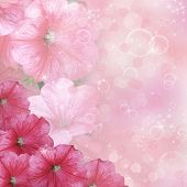 picture of petunia  - Floral background - JPG