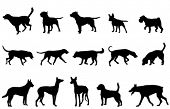 image of doberman pinscher  - dogs collection silhouettes - JPG