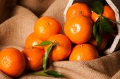 stock photo of satsuma  - Still life with clementines tumbling out of rustic bucket onto burlap sacking - JPG