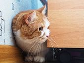 image of animal cruelty  - Portrait of yellow scared cat hiding at home - JPG