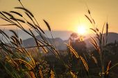 stock photo of pampas grass  - pampas grass rim light mountain landscape background