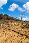 stock photo of deforestation  - Deforestation in El Nido Palawan  - JPG