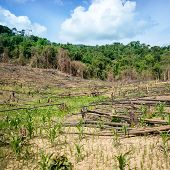 foto of deforestation  - Deforestation in El Nido Palawan  - JPG