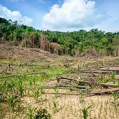picture of deforestation  - Deforestation in El Nido Palawan  - JPG