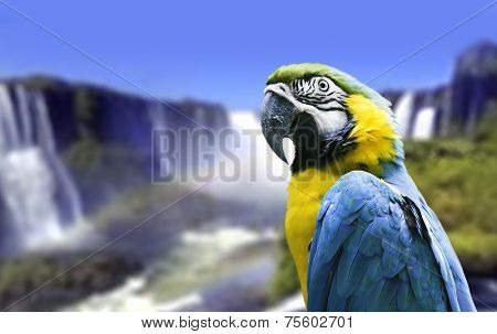 Blue and Yellow Macaw in Iguazu Falls, Brazil