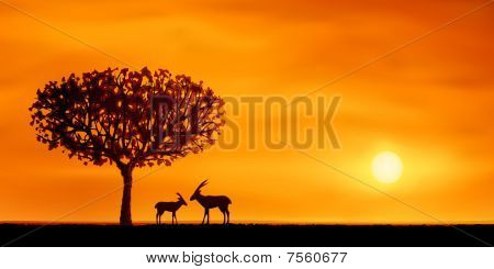 Savanna Tree