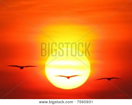 Silhouette Birds against Sun