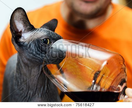 Sphynx Cat With Glass Of Red Wine