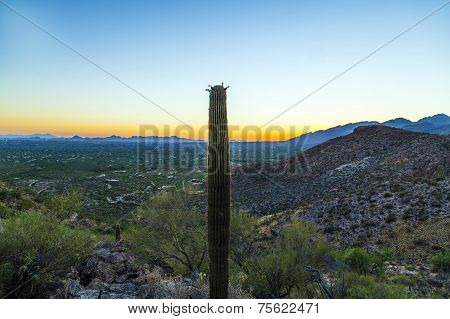 Sunset With Beautiful Green Cacti In Tuscon, Arizona