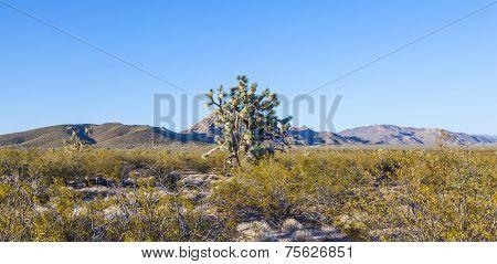 Joshua Tree In Warm Bright Light