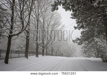 Trees and fence along slippery winter road covered in thick snow. Toronto, Canada.