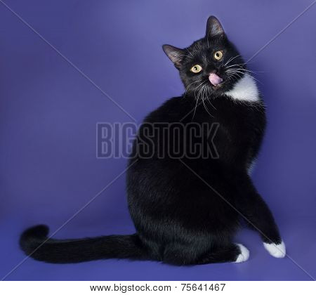 Black Cat With White Spots Sitting And Licked On Blue