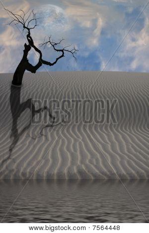 Agua en el desierto con árbol