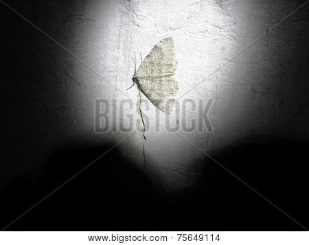 Moth sleep in the winter in a cave.