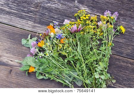 Various Summer Medical Flowers Herbs On Wooden Background
