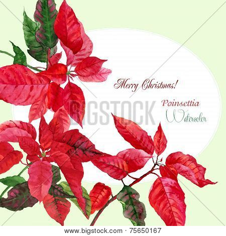 Background  with red Christmas poinsettia-03