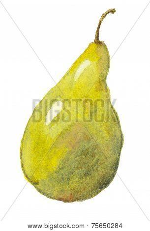 Pear, Watercolor.