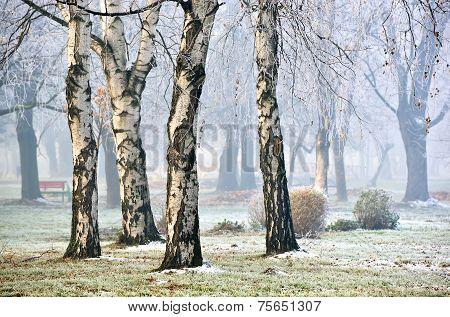 Landscape of forest in fog