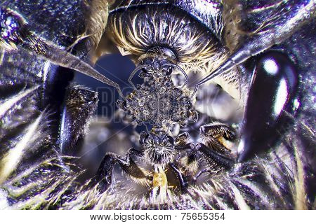 Microphoto Of A Bee