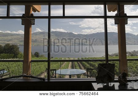 Looking Out On Vineyard