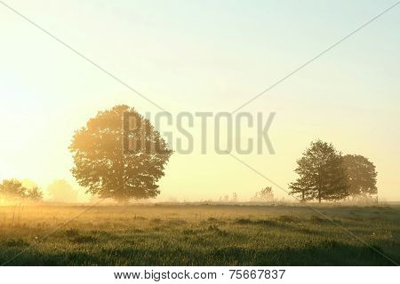 Spring meadow at dawn