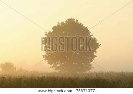 Silhouettes of trees at dawn