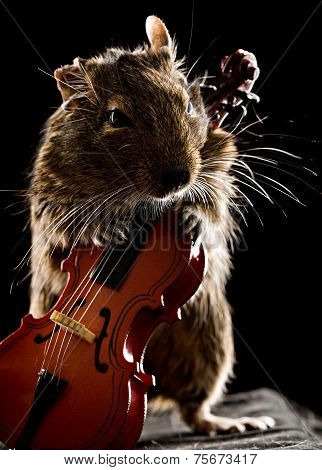 Degu Mouse Playing Cello