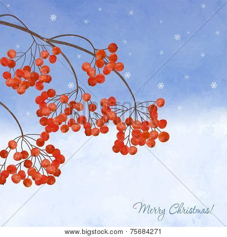 Winter Background With Branches Rowan Berry
