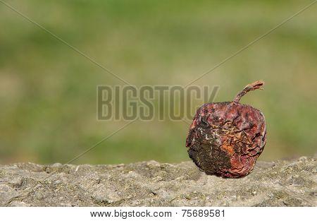 Shriveled Apple