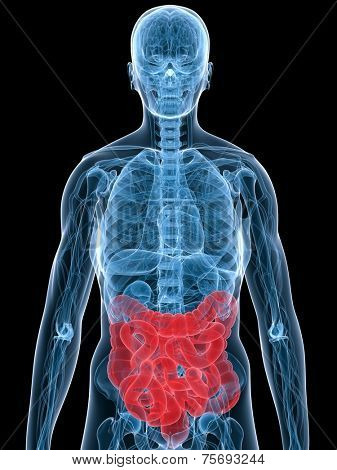 highlighted colon