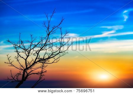Sunset Tree Landscape
