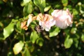 stock photo of baby spider  - Baby spider on a web in front of flowers - JPG