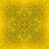 image of fibonacci  - Closeup beautiful warm sunflower background or textuer - JPG