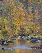 foto of maryland  - Fall Colors on the Patapsco River Rapids Trail - JPG