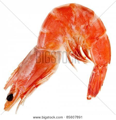 Shrimp  isolated on a white