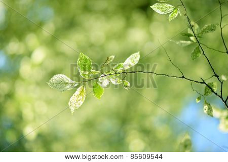 fresh and green leaves