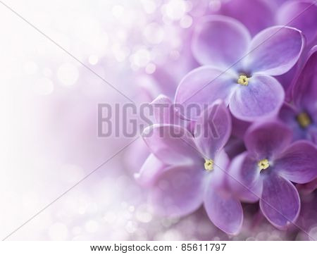 Close-up of lilac on colorful background