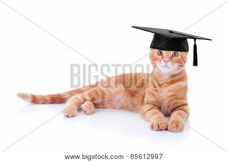Graduate Graduation Cat
