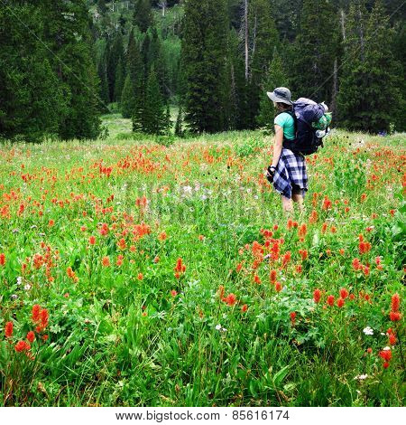 Woman young backpacking in wildflowers taking photograph