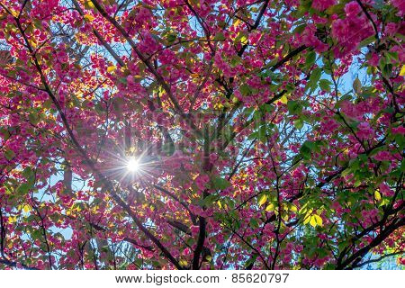 beauty sakura twig close up