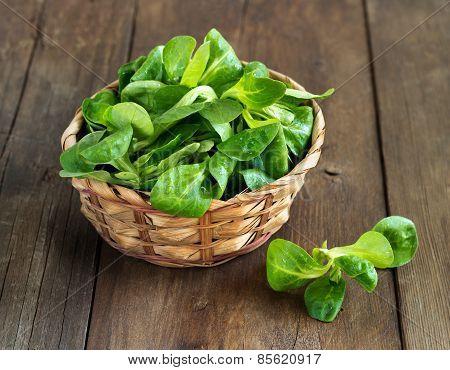 Field Salad