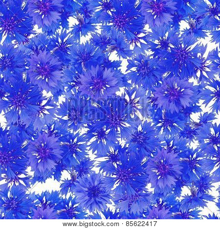 seamless pattern. bouquet of cornflowers