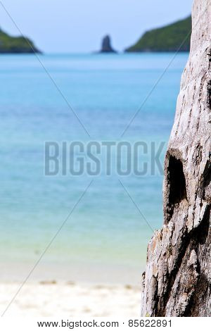 Asia   Beach  Tree  Rocks In Thailand  And South China Sea