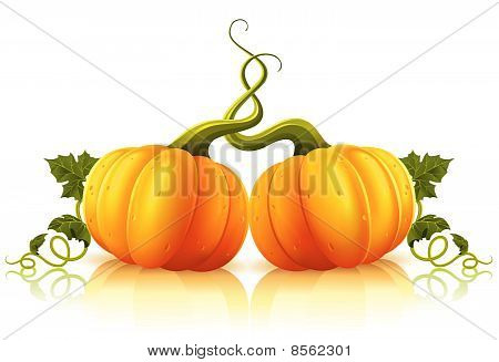two orange pumpkins with green leaves