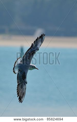 Seagull Flies In Front Of A Beach With Open Wings
